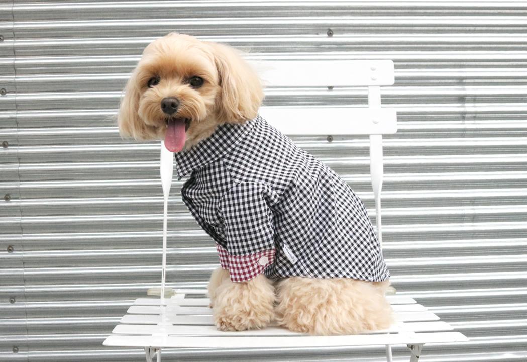 check point shirt36,000원-누와월넛펫샵, 강아지용품, 의류/액세서리, 의류바보사랑check point shirt36,000원-누와월넛펫샵, 강아지용품, 의류/액세서리, 의류바보사랑